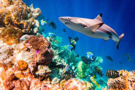 Reef with a variety of hard and soft corals and tropical fish. Maldives Indian Ocean. photo