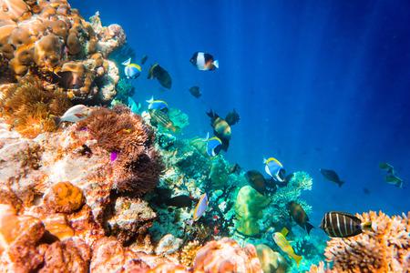 ハードとソフトのサンゴと熱帯魚の様々 なサンゴ礁します。インド洋のモルディブ。