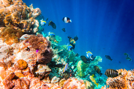 exoticism saltwater fish: Reef with a variety of hard and soft corals and tropical fish. Maldives Indian Ocean.