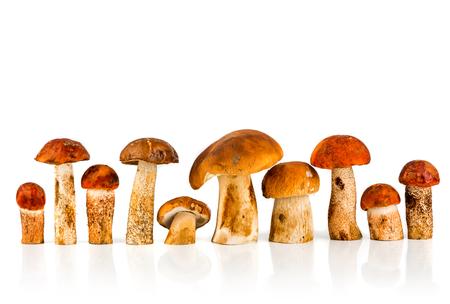 stipe: Orange-cap Boletus and porcini mushroom on a white background Stock Photo