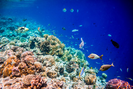 soft corals: Reef with a variety of hard and soft corals and tropical fish. Stock Photo