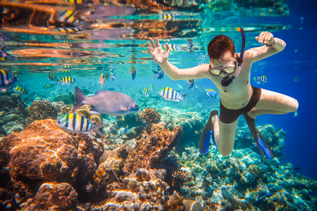exoticism saltwater fish: Snorkeler diving along the brain coral. Maldives Indian Ocean coral reef.