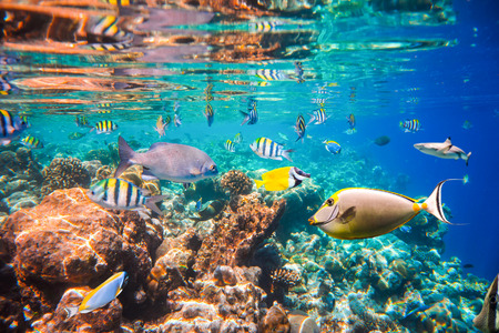 exoticism saltwater fish: Reef with a variety of hard and soft corals and tropical fish. Maldives Indian Ocean coral reef.
