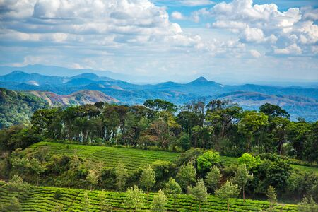 agriculture india: Landscape of the tea plantations in India, Kerala Munnar. Stock Photo