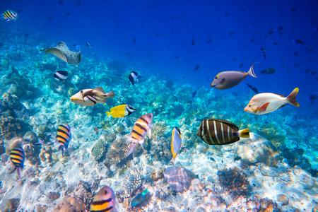 ハードとソフトのサンゴと熱帯魚の様々 なサンゴ礁します。モルディブの海のサンゴ礁。警告 - 本格的な挑戦的な条件で水中撮影します。少し穀物