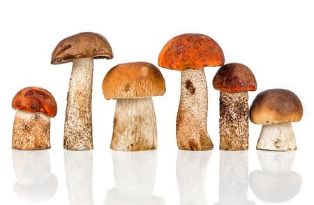 boletus mushroom: Orange-cap Boletus and porcini mushroom on a white background Stock Photo