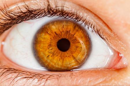 globo ocular: Ojo Photo humano de cerca.
