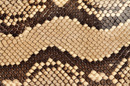 serpent: Background snake skin.
