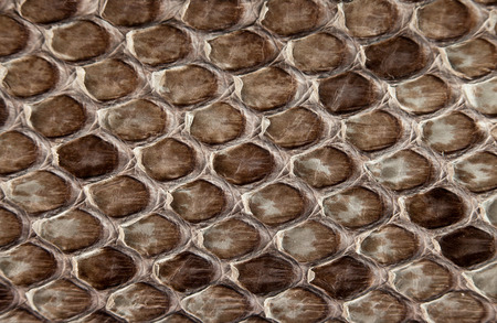 snake skin: Background snake skin.
