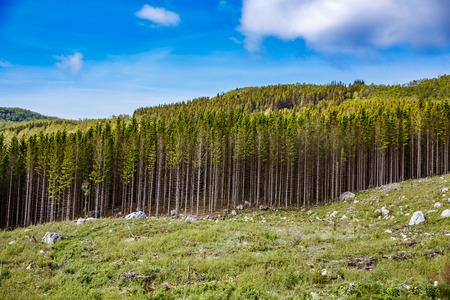 ノルウェーでの森林伐採 写真素材 - 45711851