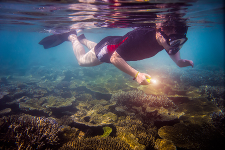 brain coral: Snorkeler diving along the brain coral with flashlight Stock Photo
