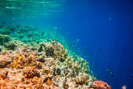 exoticism saltwater fish: Reef with a variety of hard and soft corals and tropical fish.Maldives - Ocean coral reef. Warning - authentic shooting underwater in challenging conditions. A little bit grain and maybe blurred.