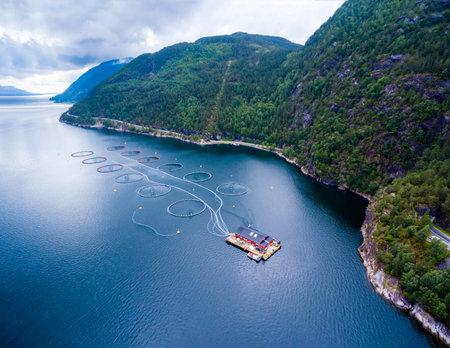 salmon fishery: Farm salmon fishing in Norway aerial