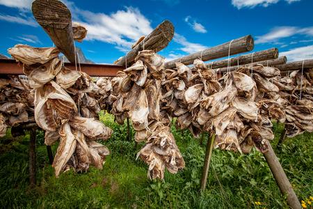 lofoten: Lofoten islands fish heads drying on racks