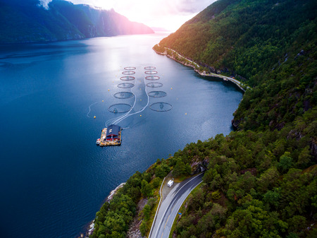norway: Farm salmon fishing in Norway aerial photography.