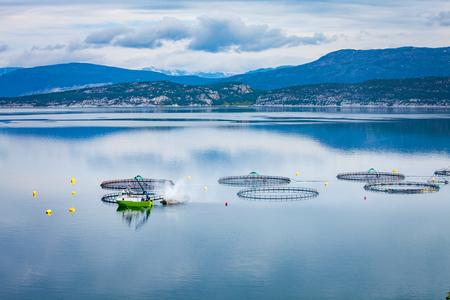 Granja pesca del salmón en Noruega Foto de archivo - 73787441