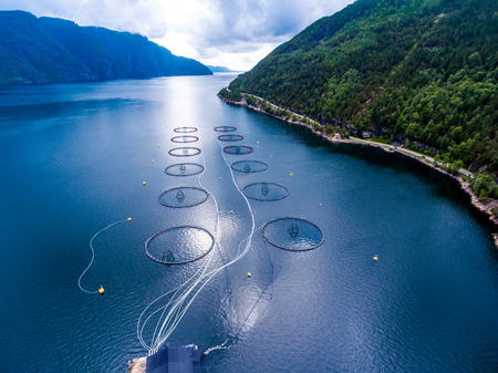 Farm salmon fishing in Norway aerial photography.