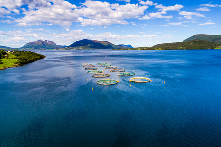 Farm salmon fishing in Norway Aerial FPV drone photography.