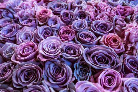 Natural roses closeup