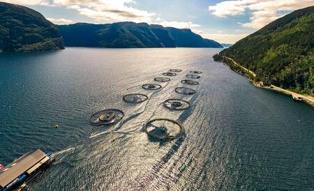 Farm salmon fishing in Norway. 写真素材 - 128817224