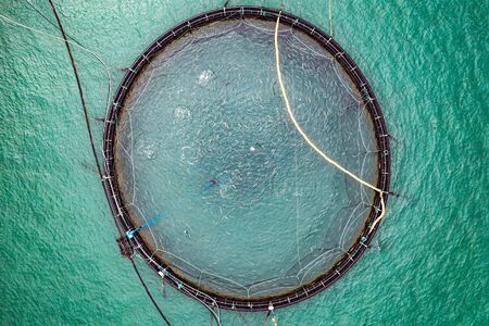 Farm salmon fishing in Norway. Norway is the biggest producer of farmed salmon in the world, with more than one million tonnes produced each year.