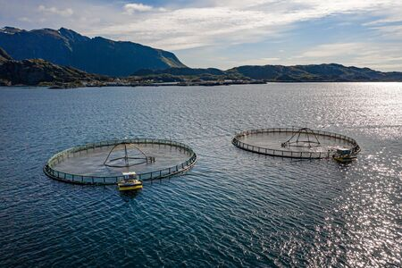 Farm salmon fishing in Norway. Norway is the biggest producer of farmed salmon in the world, with more than one million tonnes produced each year. 写真素材 - 130316094