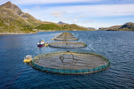 Farm salmon fishing in Norway. Norway is the biggest producer of farmed salmon in the world 写真素材 - 130316097