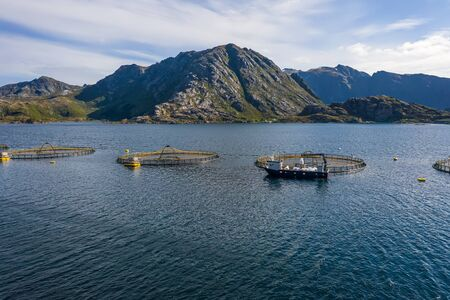 Farm salmon fishing in Norway. Norway is the biggest producer of farmed salmon in the world, with more than one million tonnes produced each year. 写真素材 - 131393619
