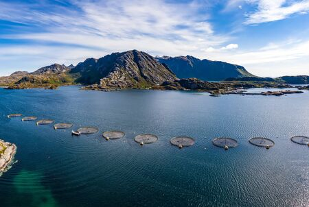 Farm salmon fishing in Norway. Norway is the biggest producer of farmed salmon in the world, with more than one million tonnes produced each year. 写真素材 - 131393548
