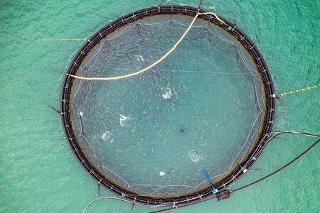 Farm salmon fishing in Norway.
