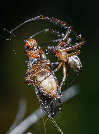 Close up macro shot of a spider grabbed the victim and wrapped it in a web. 写真素材