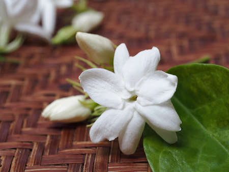 basketry: Jasmine white flower on basketry Stock Photo