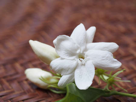 Jasmine white flower on basketry Stock Photo