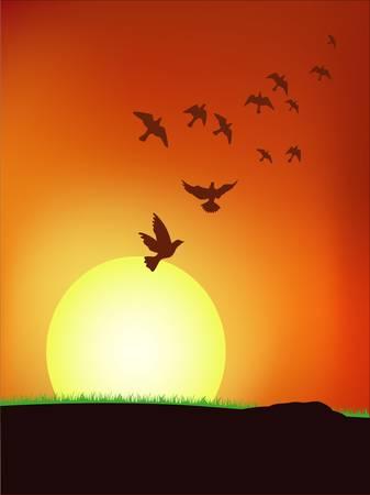 roost: Bird on the sky