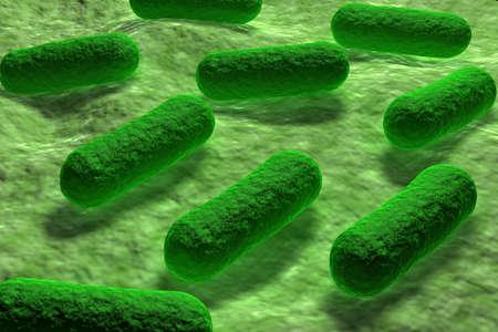 bacterie: Zonsondergang in de zomer veld