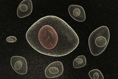 DNA Nucleus Organic Cells Stock Photo - 10240486