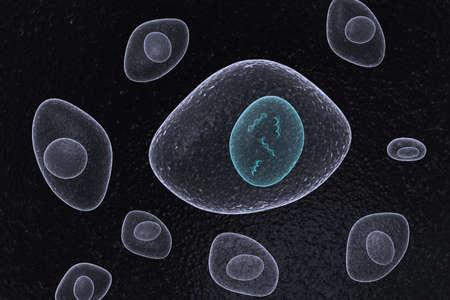 DNA Nucleus Organic Cells Stock Photo - 10240487