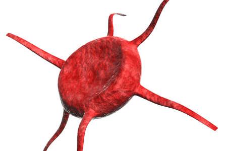 celula animal: Glóbulos Thingy