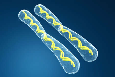 human chromosomes: chromosome