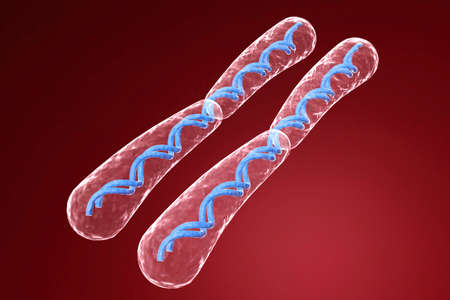 cromosoma: cromosoma  Foto de archivo