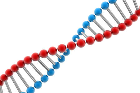 double helix: Dna   Stock Photo