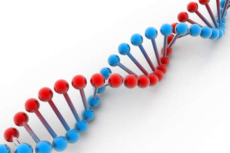 researches: dna spiral in a white back ground   Stock Photo