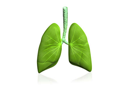 Human lungs in color background  photo