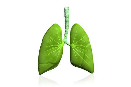persona respirando: Pulmones humanos en fondo de color