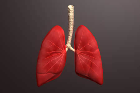 gullet: Human lungs in color background
