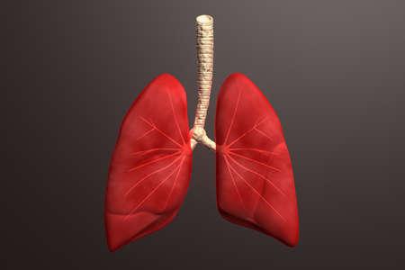 gullet: Los pulmones humanos en el color de fondo
