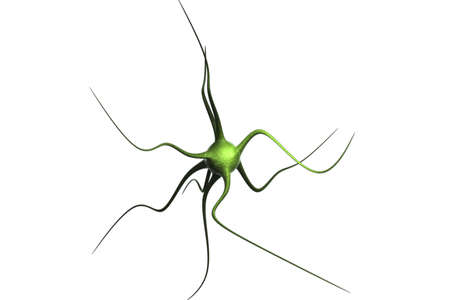 3d rendered neuron on white background photo