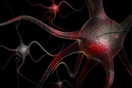 Neurons Stock Photo - 10629089