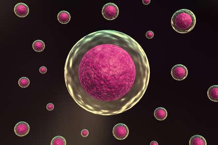 membrana cellulare: Cella con nucleo Archivio Fotografico