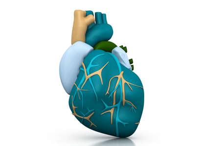 human vein heartbeat: Human heart